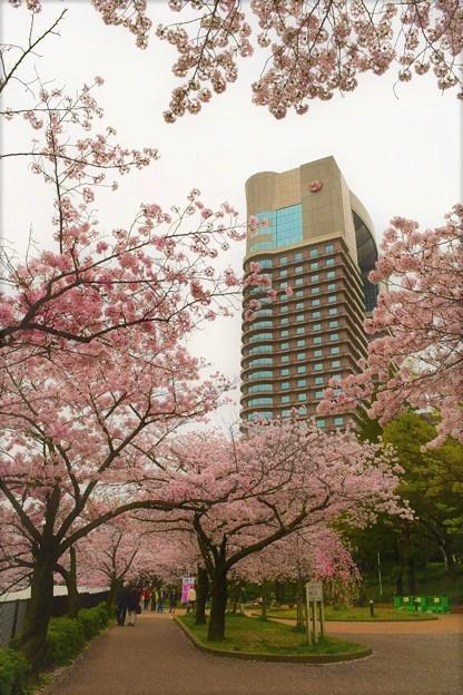帝国ホテル大阪と桜並木