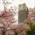 Photos: 帝国ホテル大阪と桜並木