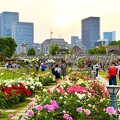 写真: 都会のオアシス 中ノ島バラ園