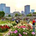 Photos: 都会のオアシス 中ノ島バラ園