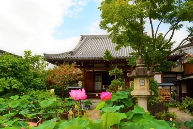 大蓮寺の本堂と蓮