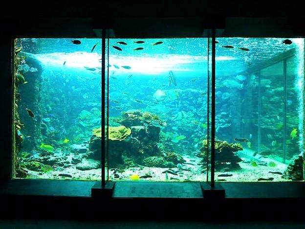 串本海中公園 水族館 串本の海水槽