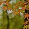 色づき始めた紅葉