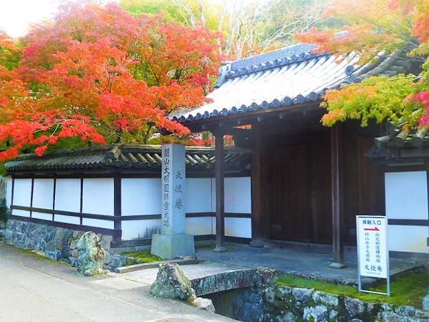 外から見ても紅葉が綺麗な天授庵(南禅寺塔頭)