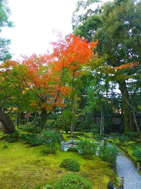 色づく紅葉