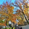 名古屋城周辺の秋の風景