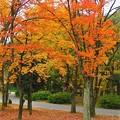 写真: 大阪城公園の紅葉