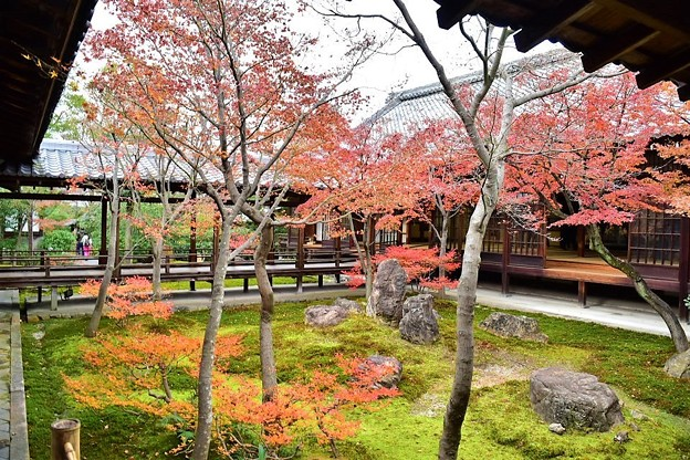 本坊中庭と紅葉