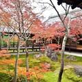 写真: 本坊中庭と紅葉