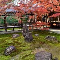 Photos: 京都の中でも比較的遅くに見頃を迎える