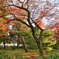 写真: 参道の紅葉
