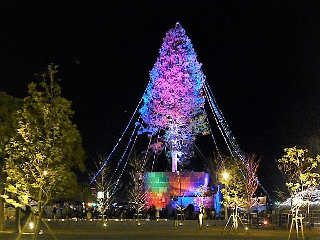 公園からのクリスマスツリー