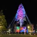 芝生広場からのクリスマスツリー