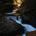 写真: 落葉の渓谷