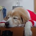 写真: サンタクロース疲れました・・・