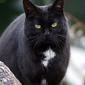 Photos: 島の猫