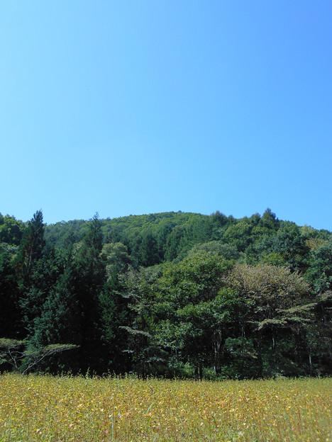 0924_キノコを探した森