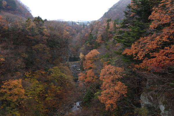 大倉ダム付近の紅葉もまだ綺麗