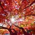 新宿御苑の萌える赤い屋根