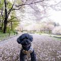 Photos: 立花寺緑地リフレッシュ農園♪