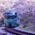 写真: 桜のトンネル♪2
