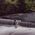 犬鳴川のホタル♪2