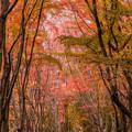 河内藤園の紅葉♪