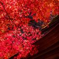 写真: 明石寺の紅葉♪