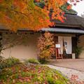 写真: レストラン茅乃舎の紅葉♪