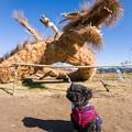 写真: 藁かがしとレオン♪