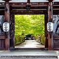 石山寺新緑