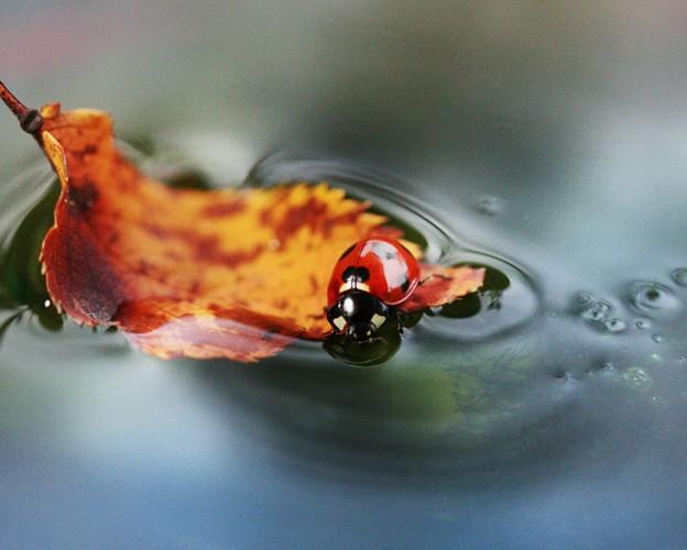 写真: 落ち葉に揺られ・・
