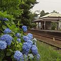 写真: 小湊鉄道 09