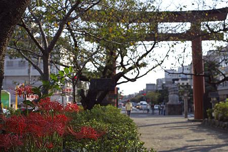 秋の鎌倉 39
