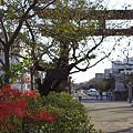 写真: 秋の鎌倉 39