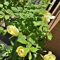 Photos: わが家の庭