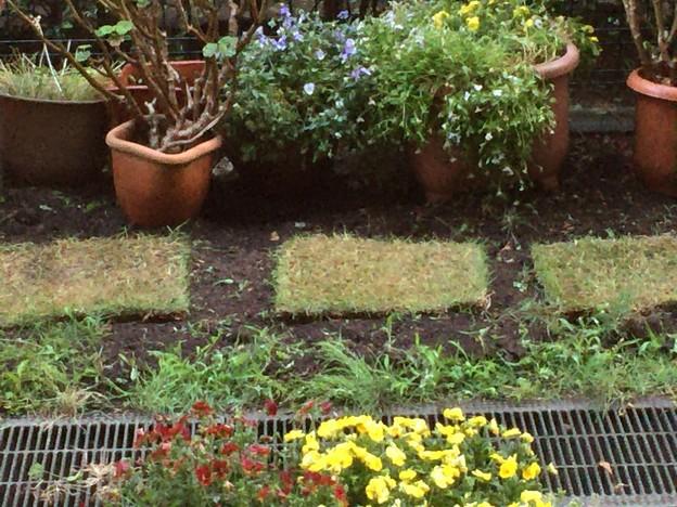 芝生を敷きました