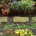 写真: 芝生を敷きました