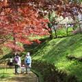 Photos: モミジと桜