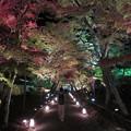 写真: 紅葉のライトアップ