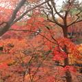 Photos: 東福寺(3)