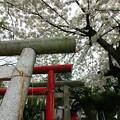 写真: 上孫伏見稲荷神社