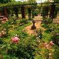 写真: 七ツ洞公園  秘密の花園