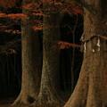 写真: 水戸八幡宮 烈公御涼所
