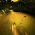 写真: ヒカリモの洞穴 日立市