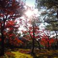写真: 京都楓葉