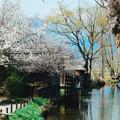 写真: 春風拂面