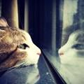 写真: My cat
