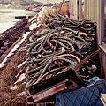 Photos: snakes