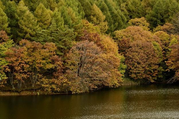 外山森林公園紅葉 171015 (6)